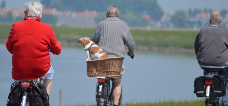 Prolonger la vie active après 65 ans